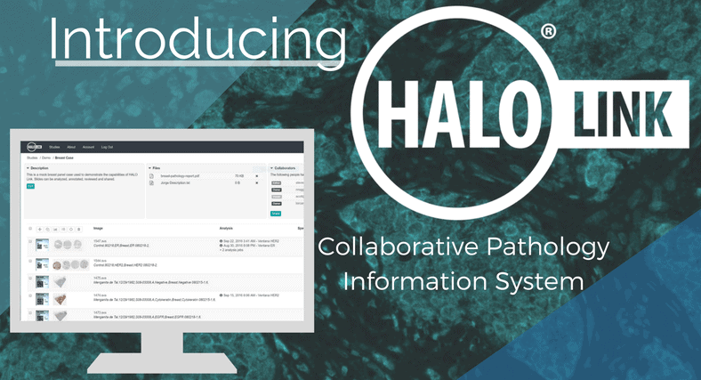 November 15th Webinar:  Introducing HALO Link, Collaborative Pathology Information System